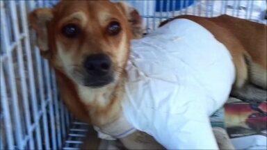 Cachorro baleado no Jacarezinho vai ser amputado - Animal foi atingido durante tiroteio na terça-feira