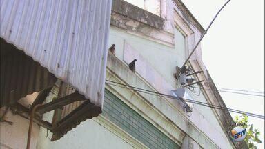 Passageiros reclamam de condições precárias da rodoviária de Jardinópolis, SP - Fezes de pombos em bancos e orelhões causam mau cheiro no local.