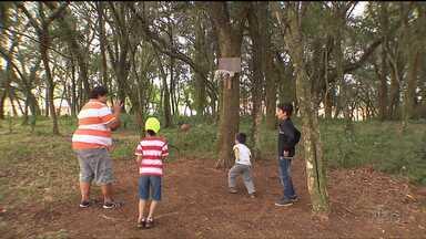Bosque comunitário muda vida de crianças em bairro de Curitiba - Foi uma atitude simples que mudou o cenário da região.
