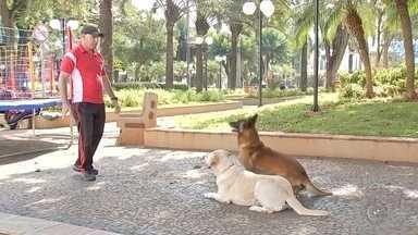 Estimacão acontece neste domingo (26) em Tietê - Neste domingo (26) acontece o Estimacão, em Tietê. Um dia cheio de atividades, que reúne famílias inteiras e seus animais de estimação com muitas brincadeiras, lazer e diversão.