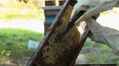 Chuva e frio prejudicam produção de mel no RS - Preço do mel desanima consumidores.