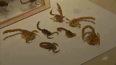 Moradores de Fortaleza temem infestação de escorpião - Escorpião é o animal peçonhento que mais mata no Ceará.