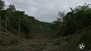 Empresa é autuada por derrubada de árvores em parque de Caruaru - Empresa não tinha licença para desmatar no parque ambiental, diz prefeitura.