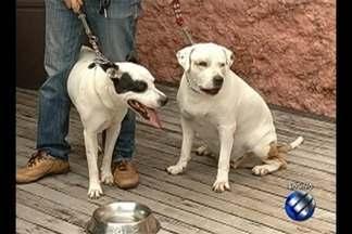 Especialista tira dúvidas sobre cio e reprodução de animais no quadro 'Dica animal' - Médico veterinário explica os critérios necessários para garantir a saúde de cães e gatos.