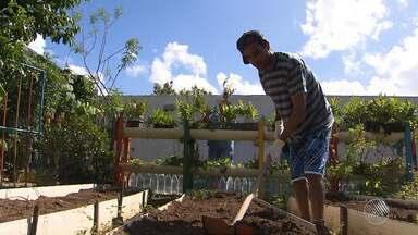 """Exemplo: horta das Obras de Irmã Dulce ajuda no tratamento de pessoas com deficiências - É a """"horto-terapia"""", um projeto premiado internacionalmente."""