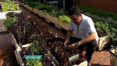 Restaurante aproveita a laje para cultivar hortaliças oferecidas nos pratos do cardápio - Na laje do restaurante são cultivadas 20 variedades de verduras e ervas sem agrotóxicos. As mudas são plantadas em intervalos de dois meses para renovar a produção.