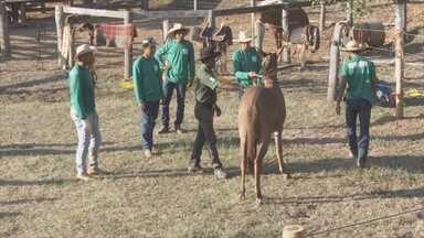 Curso de doma de animais é realizado em Ariquemes - A técnica ensina a amansar cavalos, burros e mulas.