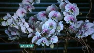 Quadro Verde traz as novidades apresentadas pelos produtores na Garden Fair - A orquídea frozen, com um tom azulado, e o antúrio maravilha, inteiramente na cor vinho, são duas das novidades da exposição em Holambra, cidade de São Paulo que mais produz flores no Brasil.