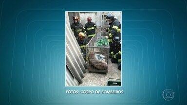 Bombeiros capturam onça em quintal de casa em Itapevi - O animal foi levado para o Centro de Triagem de Animais Silvestres, em Barueri.