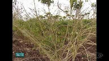 Produtor rural do ES supera problemas de falta de água - Barragem de 300 metros salvou colheita de café.