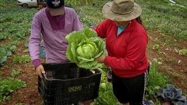 Agricultores convencionais passam a cultivar produtos orgânicos - Eles deixaram de comer os produtos que plantavam e vendiam por causa do agrotóxico. Mudança revolucionou vida de casal.