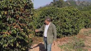 Chuva nos meses de maio e junho prejudica produção de cafés especiais no Sul de Minas - Chuva nos meses de maio e junho prejudica produção de cafés especiais no Sul de Minas