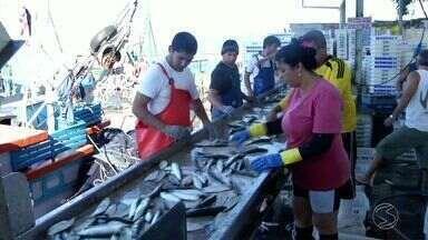 Após período de defeso, pesca da sardinha é liberada em Angra dos Reis, RJ - Retomada da pesca surpreendeu pescadores, que estão na expectativa para temporada.