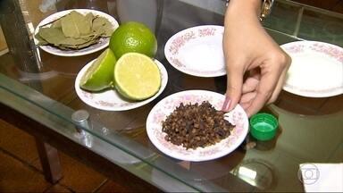 Casa Fácil: aprenda como evitar barata, formiga e mosquito com produtos naturais caseiros - A repórter Larissa Bernardes mostra como usar produtos e alimentos caseiros para manter pragas afastadas.