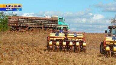 Plantio do milho começa a ganhar força no RS - Neste ano, a expectativa é de aumento de até 20% na área cultivada.