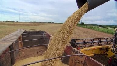 Novo levantamento da Conab aponta queda na produção de grãos em 2016 - A estimativa é que 188 milhões de toneladas sejam produzidas - 20 a menos que a safra anterior. O clima é o maior responsável pela queda.