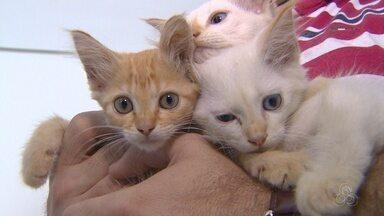 Agressores de animais podem ser presos após denúncias - Maus-tratos contra animais deve ser anunciado.