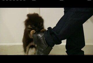 Adestramento pode ser alternativa para facilitar cuidado com cães - Problemas com agressividade pode ser resolvido com técnica.