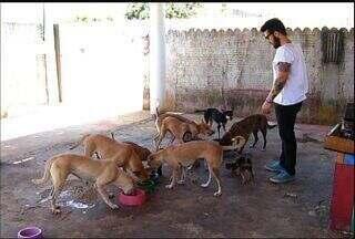 Fotógrafo cria projeto para animais abandonados no município de Brejo Santo - Projeto 'Vida de cachorro' consiste na divulgação de fotos dos animais abandonados para arrecadar alimentos e proporcionar a adoção.