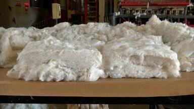 Beneficiamento agita algodoeiras em MT - Com a colheita das lavouras praticamente encerrada, foco agora é na qualidade da pluma.