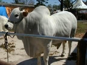 Exposição concentra animais de alto valor comercial - Evento segue até o dia 14 de setembro.