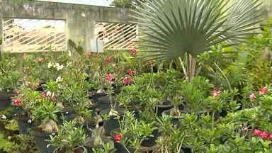 Produtores estão lucrando com o Paisagismo em Santarém - Venda de flores e plantas ornamentais movimentam exposições e feiras da cidade.