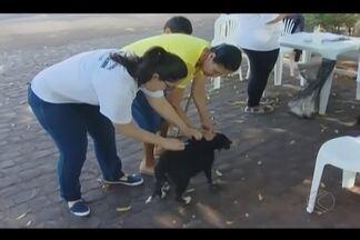 Campanha de vacinação antirrábica termina na área urbana de Araguari - Vacinação ainda prossegue na zona rural. Cães e gatos estão sendo vacinados.