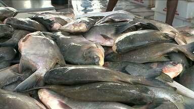 Semana do Peixe visa estimular o consumo do pescado em São Luís - Em São Luís, além de divulgar os benefícios desse tipo de alimento, as ofertas estão atraindo mais consumidores.