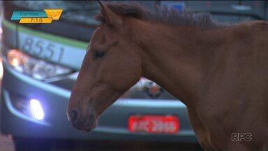 Acidente deixou o trânsito lento na BR-369 nesta manhã, em Londrina - O motorista de um ônibus não conseguiu desviar de um cavalo que cruzava a rodovia. O animal morreu. No ônibus ninguém ficou ferido.