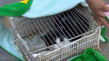 Vacinação gratuita de cães e gatos é realizada neste sábado em Belo Horizonte - Há 27 anos Belo Horizonte não registra casos de raiva, segundo a Secretaria Municipal de Saúde.