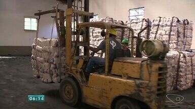 Agricultores dobram produção de cana-de-açúcar no Sul do Espírito Santo - Produtores estão preocupados com a seca que pode afetar a safra do ano que vem.