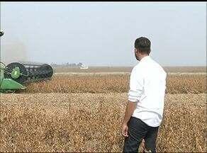 Produtores comemoram ausência de praga na colheita de soja em Formoso do Araguaia - Produtores comemoram ausência de praga na colheita de soja em Formoso do Araguaia