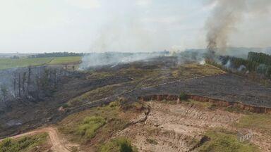 Região administrativa de Campinas registra 17% dos casos de queimadas de todo o estado - Neste ano, foram registrados 341 incêndios na região de Campinas, um aumento de 81% em relação ao mesmo período de 2015.