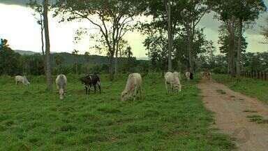 Modernização em fazendas aumenta os ganhos de pecuaristas - Estudo realizado pela Acrimat mostra que, com os investimentos na intensificação da pecuária, os criadores alcançam melhores resultados.