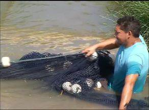 Criadores de peixe do norte do Tocantins iniciam nova safra - Criadores de peixe do norte do Tocantins iniciam nova safra