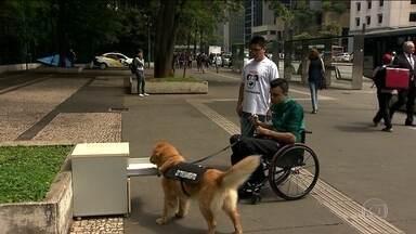 Cães-guia recebem treinamento para ajudar cadeirantes - A ideia dos cães de serviço é da ONG Cão Inclusão, que treina o terceiro animal. Além de dedicação, há gastos para preparar um cachorrinho. Por isso, a ONG conta com doações de pessoas físicas e de empresas.