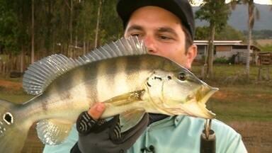 Pescaria de tucunaré-azul - Repórteres pescam na represa de Furnas.