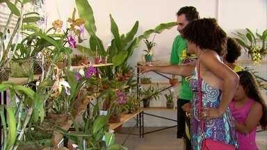 Beleza das orquídeas está em exposição aberta ao público neste final de semana - Associação Orquidófila de Pernambuco fica no bairro de Santo Amaro.