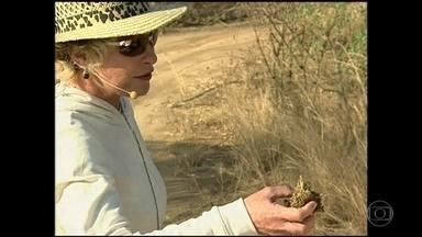 Ana Maria Braga relembra viagem à África do Sul - Apresentadora teve contato com elefantes