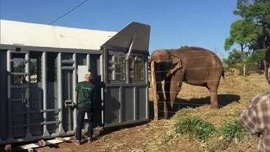 Fabricio Battaglini mostra o Santuário de Elefantes da Chapada dos Guimarães, Mato Grosso - Local resgata elefantes de espetáculo