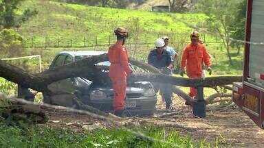 Bombeiros registram quedas de árvores durante chuva em Juiz de Fora - Durante toda a manhã desta sexta (11), ocorrências foram atendidas por corporação. Moradora do bairro Santa Rita ficou ferida e foi encaminhada ao HPS.