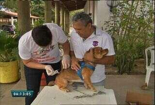 Centro de zoonoses realiza vacinação de animais de estimação no fim de semana - A meta é imunizar, pelo menos, 297 mil animais em Fortaleza.