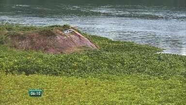 Plantas aquáticas revelam poluição no Rio São Francisco - Margens em Petrolina, no Sertão, estão tomadas pelas baronesas, que se alimentam do que tem no esgoto.