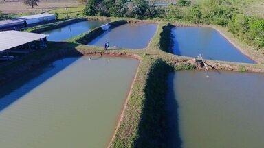 Expedição Campo: Piscicultura - Renato Cunha vai descobrir como funciona a criação de peixes em cativeiro.