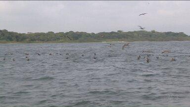 Pesquisadores monitoram aves no porto de Paranaguá - O objetivo é conhecer as espécies da região e realizar trabalhos de conservação ambiental.