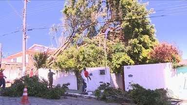 Retirada de árvores derrubadas por temporal pode demorar até 15 dias na capital - Retirada de árvores derrubadas por temporal pode demorar até 15 dias na capital