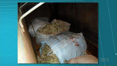 Ladrões furtam 600 quilos de feijão da roça em Ribeirão do Pinhal - Os ladrões fugiram no momento em que a PM chegou. Um caminhão foi apreendido.