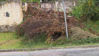 Moradores reclamam de problemas na coleta de lixo em Curitiba - A prefeitura está em débito com empresas terceirizadas que fazem o serviço de limpeza urbana. E isso tem afetado o serviço. O contrato de coleta de lixo vegetal foi suspenso.