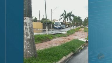 Chuva forte atinge Guariba, SP, e causa estragos - Árvores caíram e o córrego que corta a cidade por pouco não transbordou.