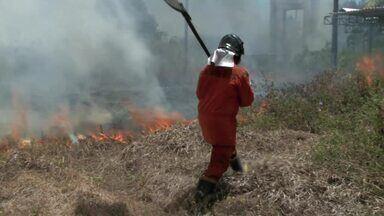 Incêndio atinge vegetação em mata no Aldebaran - Fogo foi controlado pelo Corpo de Bombeiros.